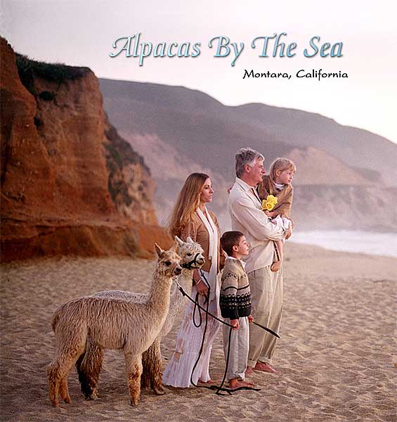 Alpacas by the Sea Family