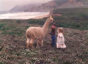 Mckinley leading an alpaca