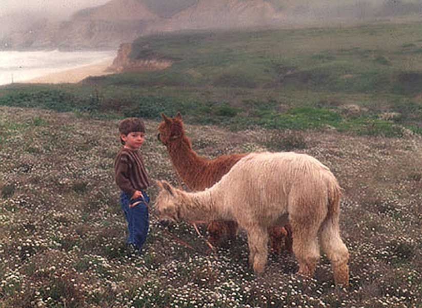Son Mckinley with Alpacas